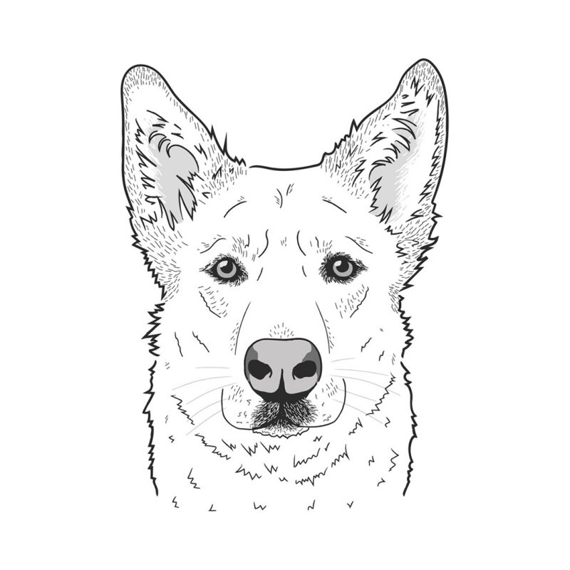 dog-illustration